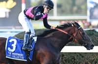 Breeders' Cup Classic 2021: Meet the fastest contenders