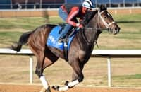 First Look: 11 stakes this weekend