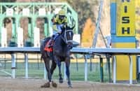 Derby invitee's owner remains doubtful about entering