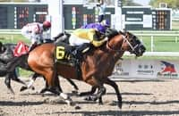 Analysis: Use these 2 horses under Maxfield in Stephen Foster