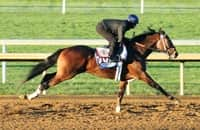 What we learned: This pace-affected horse is burning money