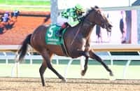Kimari comes off bench for Ward in '21 Breeders' Cup Turf Sprint