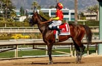 Breeders' Cup Dirt Mile 2021: Latest odds and preview