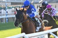 Yibir goes from last to first to win Jockey Club Derby, earn BC bid