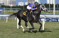 Handicapping the Pegasus World Cup Turf Invitational