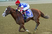 Analysis: Why Jack Christopher is a poor Breeders' Cup bet