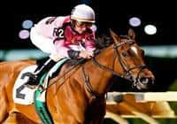 17 April 09: Comedero and Robby Albarado romped home with a 9-length win in the Blue and Gold Stakes on Charles Town Classic night at Charles Town Race and Slots in West Virginia.