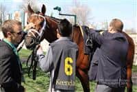 Keeneland's Commonwealth Stakes