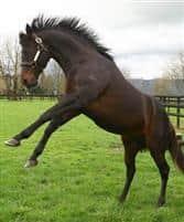 /horse/Oreilly