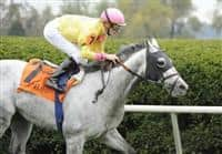 09 October 10: Silver Timber (no. 7), ridden by Julien Leparoux and trained by Chad Brown, wins the 13th running of the grade 3 Woodford Stakes for three year olds and upward at Keeneland in Lexington, Kentucky.