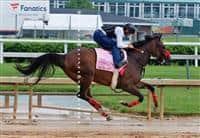 /horse/Mokat