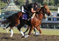 /horse/Square Eddie