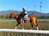 /horse/Rosalind 2