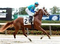 /horse/Capitaine
