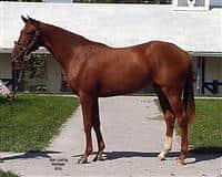 /horse/Corinthianna