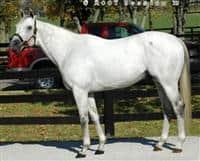 /horse/Silver Wagon