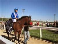 /horse/Delfmar