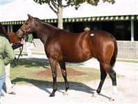 Untouched Talent at Keeneland November 2007 sale, sold as hip #14 to Audley Farm for $1,200,000