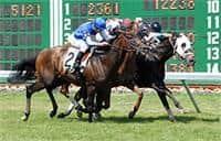 /horse/In Summation