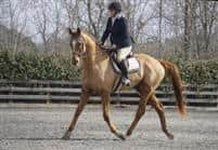Wheemaway's First Dressage Test