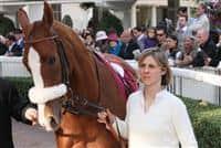 /horse/Daryakana