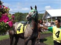 Speed Lightning (son of 2005 Kentucky Derby winner Giacomo), who returned $78.20 on a $13 wager by us at Tampa Bay Downs, March 24, 2012