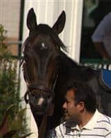 /horse/Tizaqueena