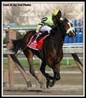 /horse/Dixie City