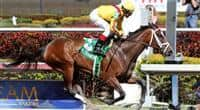 Dreaming of Julia with jockey John Velazquez wins the Gulfstream Oaks (G2) at Gulfstream Park, Hallandale Beach Florida. 03-30-2013