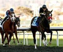 /horse/Code Warrior