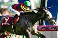 /horse/Aerolithe