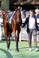 /horse/Altea 1