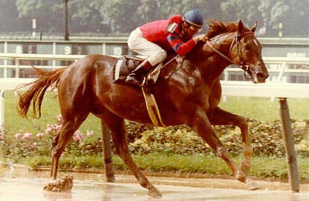 Greatest Horses Never to Win a Championship