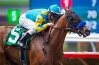 /horse/American Cleopatra