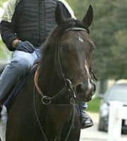 /horse/Aptitude