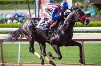 Aristocratic wins 2017 San Pedro