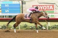 Belvoir Bay wins 2016 Torrey Pines