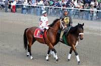 Big Brown in the post parade before the 2008 Belmont Stakes