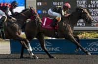 Black Hornet wins 2015 Vigil Stakes