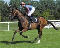 /horse/Black Sam Bellamy
