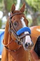 /horse/Blueskiesnrainbows