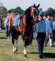 /horse/Blumin Affair