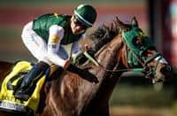 /horse/Bolt Doro