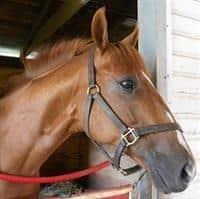 /horse/Boom Box