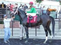 /horse/Savoy Stomp