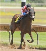 /horse/Temper Mint Patty