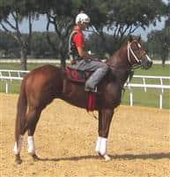 /horse/Cajun Breeze
