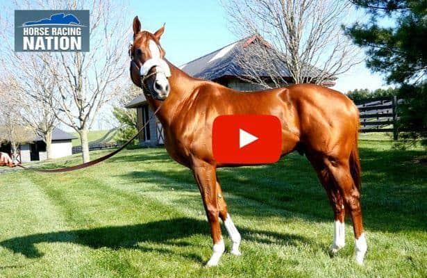 California Chrome thriving at Taylor Made Farm (VIDEO)