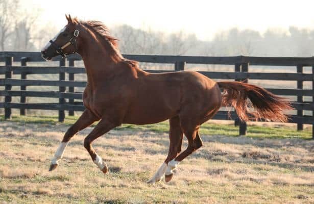 Stallion California Chrome purchased by Japanese interests