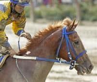 /horse/Casiguapo